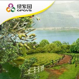 怀化绿紫园蔬菜科技主题游戏